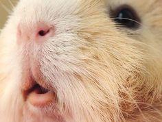 Piggie lips!!! 😍😍😍😍😍😍