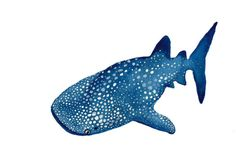 "Whale Shark Watercolor Print 5"""" x 7"""""