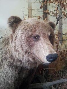Wojtek znalazł swojego misia... ;) #zjazdSocjomaniakow #Ustron #AkademiaSocjomanii Brown Bear, Animals, Animales, Animaux, Animal, Animais