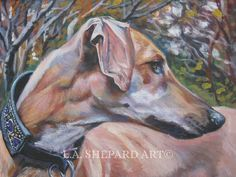 """A Sloughi dog art portrait print of an LA Shepard painting 12x16"""". Here's a wonderful tribute to your best friend and favorite breed- the Sloughi ! from an original painting by L.A.Shepard, whose unique, beautiful work has been collected around the world. Your print will be individually signed under the image by the artist, and initialed on the image. Copyright text is for display purposes only and will not appear on your artwork. The image is 12x16 inches and is printed on 13x19"""" 100%..."""