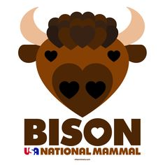 The Bison Is Now the Official Mammal of the United States recognized by the Federal Government http://www.smithsonianmag.com/smart-news/bison-now-official-mammal-united-states-180958921/ | Bison ( /ˈbīs(ə)n/ ) or buffalo ( /ˈbəf(ə)ˌlō/ ) are large, even-toed ungulates in the genus Bison within the subfamily Bovinae. Two extant and four extinct species are recognized. Of the four extinct species, three were North American: Bison antiquus, B. latifrons, and B. occidentalis. The fourth, B…