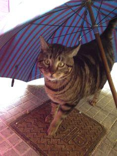 Semola non ama la pioggia!