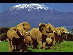 awesome Elephants of Kilimanjaro