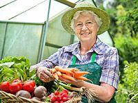 Pěstování ve skleníku: okurky, rajčata, papriky, réva, salát, kedlubny