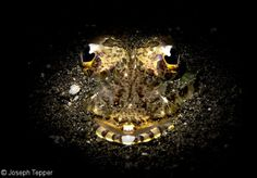 #UnderwaterPhotography at Night #NightDiving