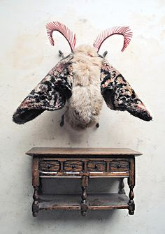 Embroidered stuffed animal moth by Mister Finch.  The creatures he makes look so real!