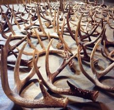 Julia's newest blog is now posted! This week, it's about Shed Hunting. She talks about the lifecycle of the antler, why to shed hunt, where to shed hunt, and when to shed hunt, as well as a few tactics that could lead to a successful hunt.