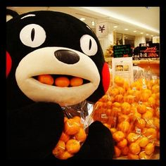 KUMAMON - Mascot of Kumamoto. Kumamon--Excuse me . you have to pay for that first. Kumamoto, Amakusa, Japanese Love, Japanese Characters, Rilakkuma, Reaction Pictures, Derp, Sanrio, Funny Photos