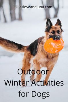 Winter and snow don't mean it's time to stop playing with your dog outside. Here are several activities you can do with your dog outside in the snow. Dog Activities, Winter Activities, Its Time To Stop, Dog Games, Puppy Care, Dog Care Tips, Done With You, Lilies, Fun Things