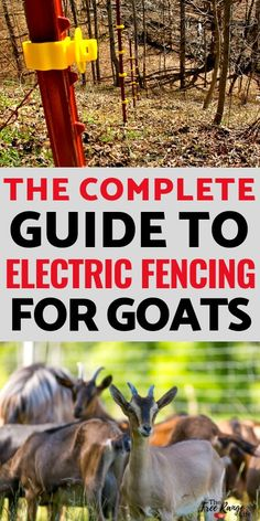 Raising Goats for Beginners: Fencing is an important part of raising goats. Learn how to use an electric fence for goats plus the pros cons of electric fencing when it comes to goats. Keeping Goats, Raising Goats, Goat Fence, Small Goat, Goat Shelter, Goat Care, Nigerian Dwarf Goats, Diy Fence, Fence Ideas
