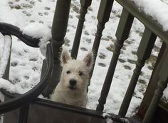 come on play in the snow with me.