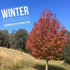 Sunny winter's day on the farm #winter #sunshine #farmlife #autumnleaves