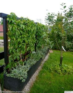 garden canes near me Garden Shrubs, Garden Trellis, Garden Landscaping, Back Gardens, Outdoor Gardens, Side Garden, Greenhouse Gardening, Backyard Fences, Dream Garden