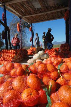 Road stall - Clanwilliam - citrus is grow along the banks of the  Olifants river Westrn cape - South Africa