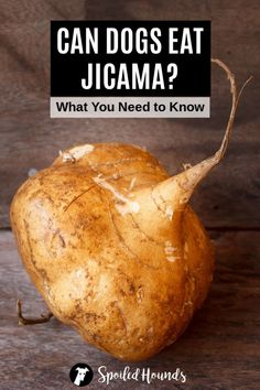 Can dogs eat jicama? Keep your dog safe and find out what you need to know about dogs eating jicama and jicama plants. #dogsafety #doghealth #dogs #doglovers #doginformation #dogownertips #pethealth #jicama What Is Jicama, Mexican Potatoes, Iron Vitamin, Water Chestnut, High Fiber Foods, Can Dogs Eat, Weird Food, Dog Eating, Low Calorie Recipes
