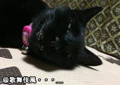 """""""今日の変顔! 今日はなんか歌舞伎か能面っぽくなりました。歌舞伎のラインとか引いたらそれっぽくなりそう。 くすっと笑って頂ければ、ミミも喜びます。 #猫 #ネコ #ねこ #猫好きさんと繋がりたい #cat #猫変顔が好きな人RT"""""""