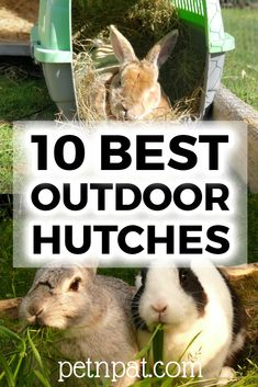 10 Best Outdoor Rabbit Hutches To Keep Your Bunny Safe #bunny #rabbit #rabbithutch #hutch #animals #pets