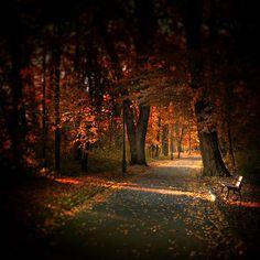 Autumn light - Landscape Photography