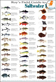 Infografías de peces 33
