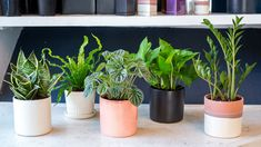 5 indoor houseplants you can't kill (unless you try really, really hard) (indoor gardening plants)