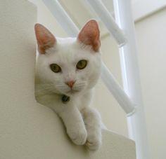 no description, cat white uploaded by observer