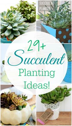 "Succulents are so popular right now! One reason: even people with almost ""black thumbs"" can keep them alive. I personally love them and think they look so gorgeous all year round. Today, I am sharing 29 amazing succulent planting ideas with you from myself and some of my favorite bloggy friends!"