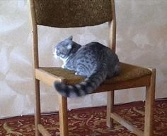 Gymnast Cat - This cat should be on the Animal Olympic Team. It appears to be having an incredibly good time.GIF