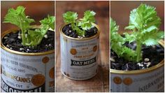 Dream State: Regrow Your Celery!