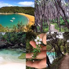 Totally forgot to post this, but 2 days ago, I visited the glorious Abel Tasman National Park. It's only accessible by boat or hours of hiking, so the entire place was pretty much empty. (The two boats in the cove belonged to our guided tour). The water color was UNREAL, and the forests were so mysterious, lush, and full of beautiful birdsong. If you ever visit NZ, you MUST GO. #abeltasmannationalpark #newzealand #NZmustdo