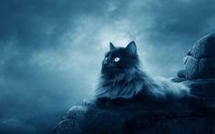 Wallpapers HD: Full Moon Cat