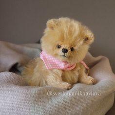 Шпиц Тедди , spitz-dog, dog, bear