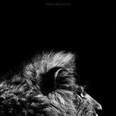 Dark Zoo, Nicolas Evariste. Every image in this series is amazing.