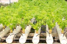 plantation fraisiers sur piquets hors sol plantation hors terre pinterest. Black Bedroom Furniture Sets. Home Design Ideas