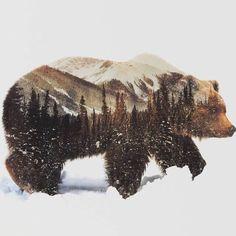 Медведь Андреас Ли