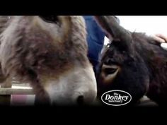 The Donkey Sanctuary cares for thousands of donkeys... there is one in Ireland too:)