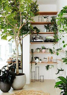 Indoor Hanging Plants with Names . Indoor Hanging Plants with Names . Pin On Botanical Flora Indoor Ivy, Indoor Trees, Indoor Plants, Potted Plants, Porch Plants, Fake Plants, Indoor Outdoor, Outdoor Living, Room Deco