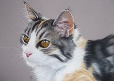 Tita 3 Beautiful cat in pastel by on DeviantArt Cutest Kittens Ever, Birman Cat, Graphite Drawings, True Art, Beautiful Cats, Animal Drawings, Cat Art, Cats And Kittens, Funny Cats