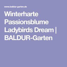 Winterharte Passionsblume Ladybirds Dream | BALDUR-Garten