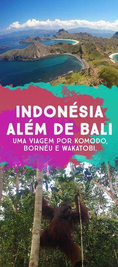 o que visitar na Indonésia: Bornéu, Wakatobi e Komodo!