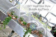 DIY West Elm Style Bubble Air Plants Tutorial