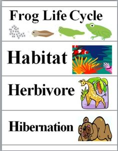 Animals Word Wall Cards