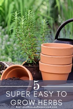Growing an herb garden doesn't have to be complicated. Learn how to get started with herb gardening with these easy to grow varieties. #herbgarden #gardening Growing Vegetables Indoors, Fall Vegetables, Growing Herbs, Growing Tomatoes, Indoor Gardening Supplies, Container Gardening, Kitchen Herbs, Vegan Kitchen, Kitchen Recipes
