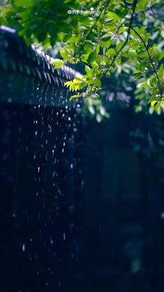 Green Background Video, Green Screen Video Backgrounds, Light Background Images, Photo Background Images, Beautiful Nature Scenes, Beautiful Photos Of Nature, Beautiful Nature Wallpaper, Nature Photos, Rain Photography
