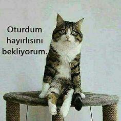 Oturdum hayırlısını bekliyorum. :)  #karikatür #mizah #matrak #komik #espri #şaka #gırgır #komiksözler