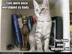 Cats were once worshiped as Gods...They have never forgotten this.