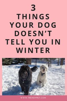 With winter on its way, you will want to make sure you have these 3 things to help your dog get through the winter! Click now to get these dog winter tips! Dog Care Tips, Pet Care, Puppy Care, Winter Hacks, Winter Tips, Dog Illnesses, Dog Minding, Funny Dog Memes, Funny Dogs