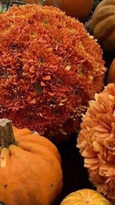 Buy Flowers Online | Wholesale Flowers