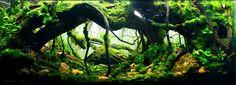 オープン投票|世界水草レイアウトコンテスト2012