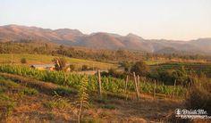 Unusual Wine Regions drinkmemag.com drink me red mountain estate vineyard. #travel #places #wine #region