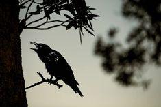 The Birds   Metalbird USA American Crow, Brown Bird, Garden Whimsy, Great Horned Owl, Bird Silhouette, Metal Birds, Banksy, Large Art, Installation Art